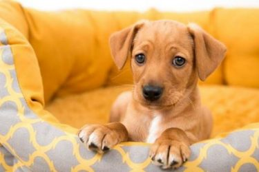 Have Pets at Home? How to Maintain Energy-Efficient Climate Control for Your Fur Babies