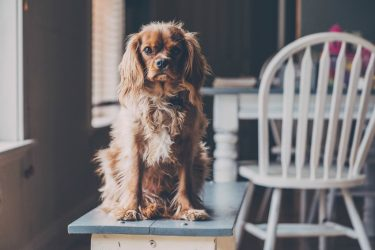 How to Make Your Home Dog-Friendly Without Sacrificing the Style