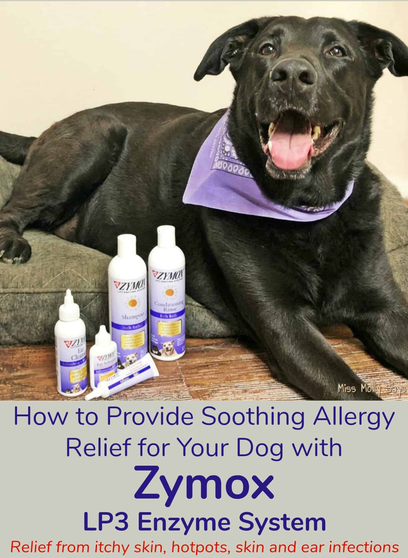 How to Provide Soothing Allergy Relief for Your Dog with Zymox