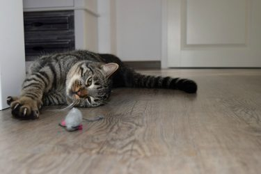 Toys For Cats - A Short Buying Guide