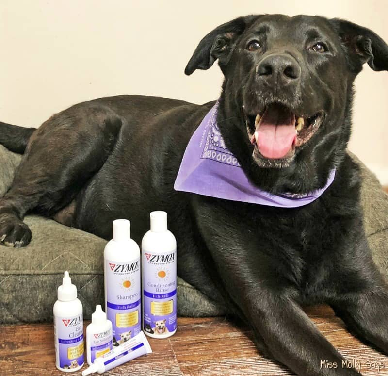 How to Provide Soothing Allergy Relief for Your Dog with the Help of Zymox
