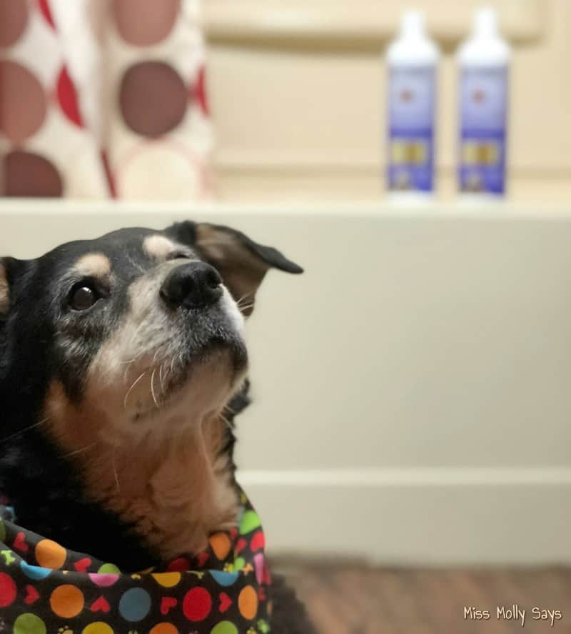 How To Provide Soothing Allergy Relief For Your Dog With