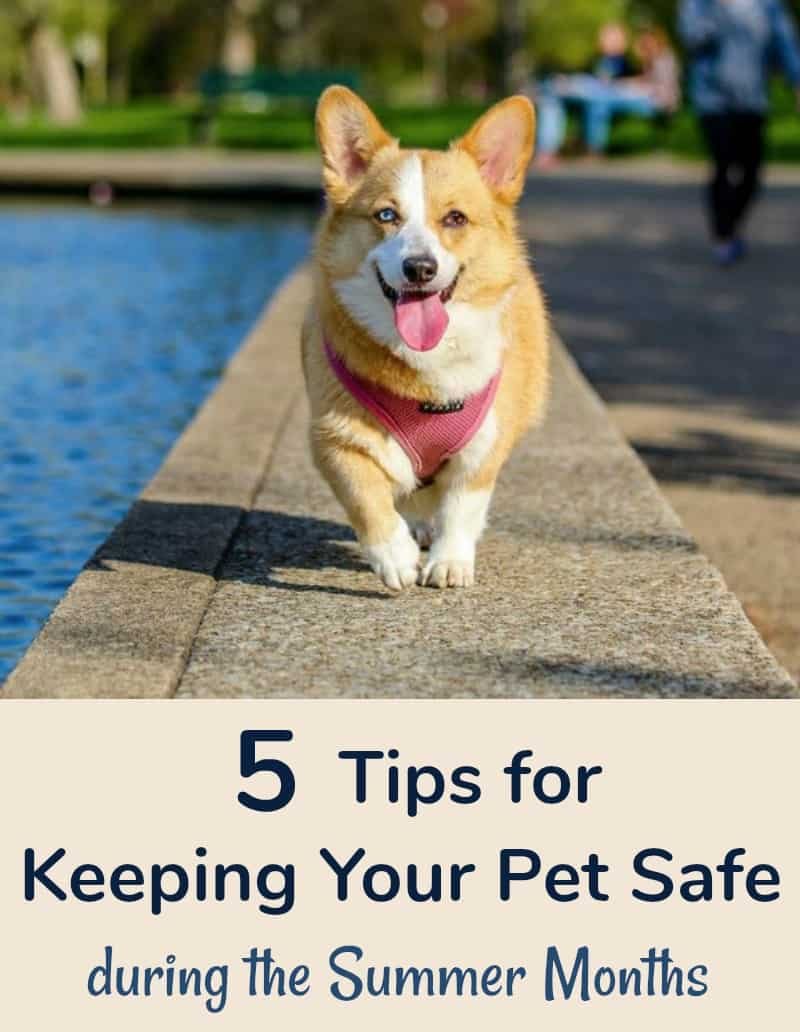 5 Tips for Keeping Your Pet Safe during the Summer Months