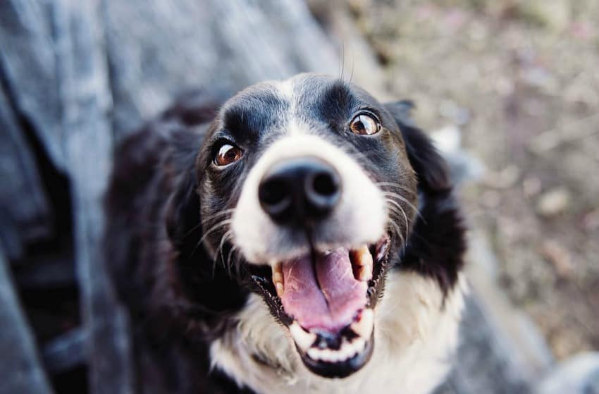 Canine Dentistry - How Your Pup Can Avoid Oral Infections