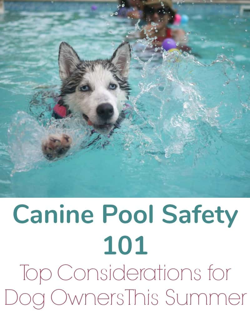 Canine Pool Safety 101 - Top Considerations for Dog Owners This Summer