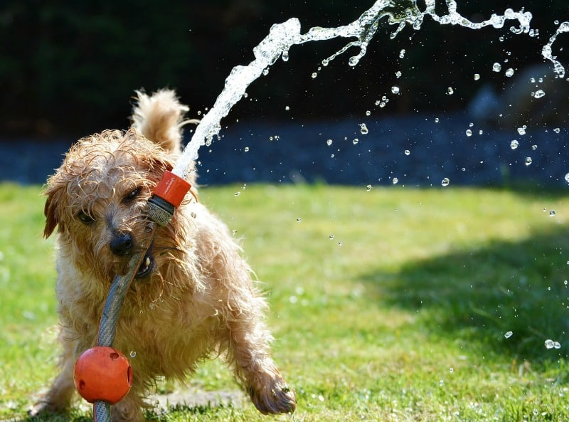 4 Must-Have Items to Keep Your Dog Healthy and Happy This Summer