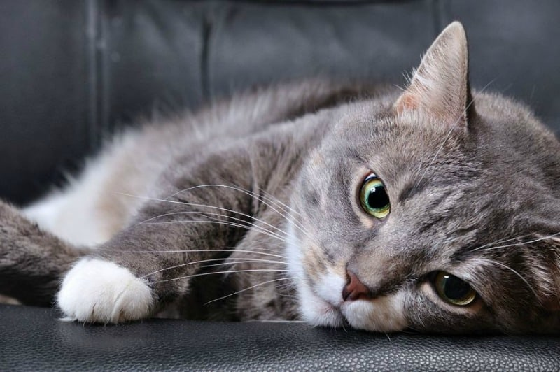 Kitty Sniffles: How to Know It's Time for a Vet