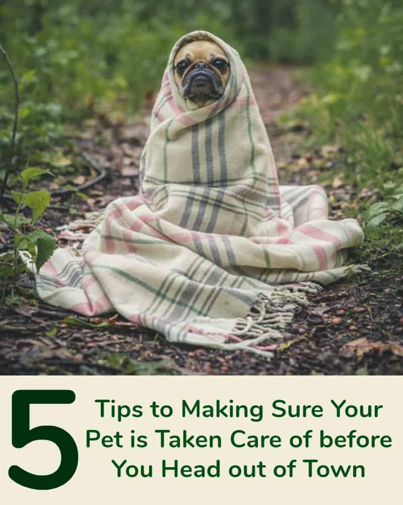 5 Tips to Making Sure Your Pet is Taken Care of Before You Head out of Town
