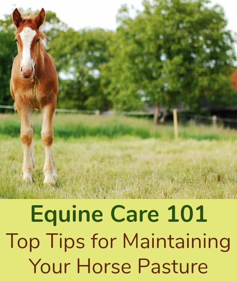 Equine Care 101 Top Tips for Maintaining Your Horse Pasture