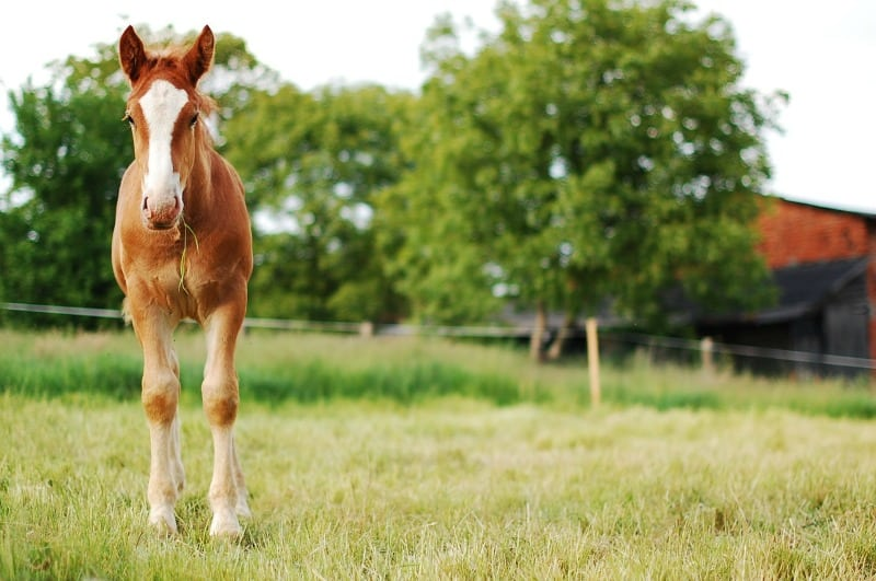 Equine Care 101: Top Tips for Maintaining Your Horse Pasture