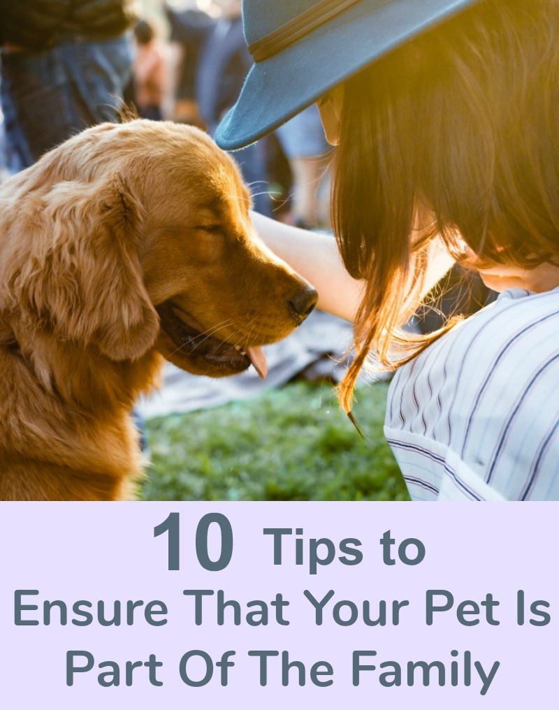 How To Ensure That Your Pet Is Part Of The Family