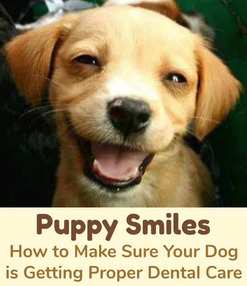 Puppy Smiles How to Make Sure Your Dog is Getting Proper Dental Care