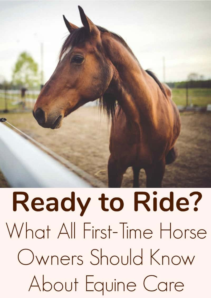 Ready to Ride What All First-Time Horse Owners Should Know About Equine Care