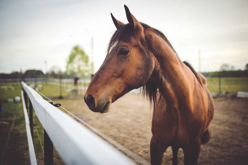 Ready to Ride? What All First-Time Horse Owners Should Know About Equine Care