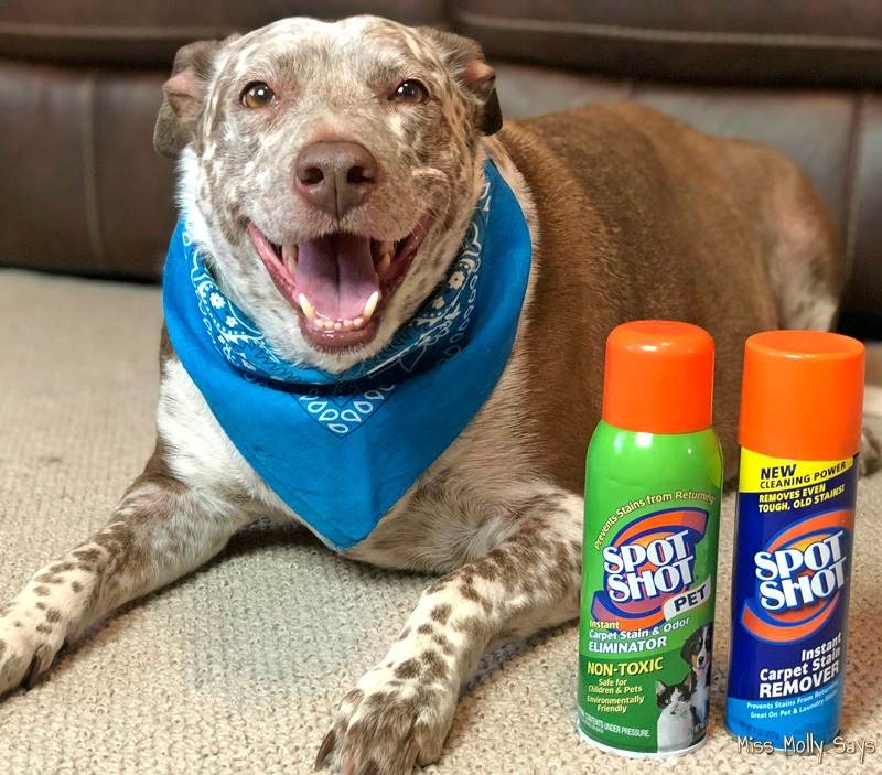 How to Battle Summer's Unique and Tough Pet Stains #SpotShot