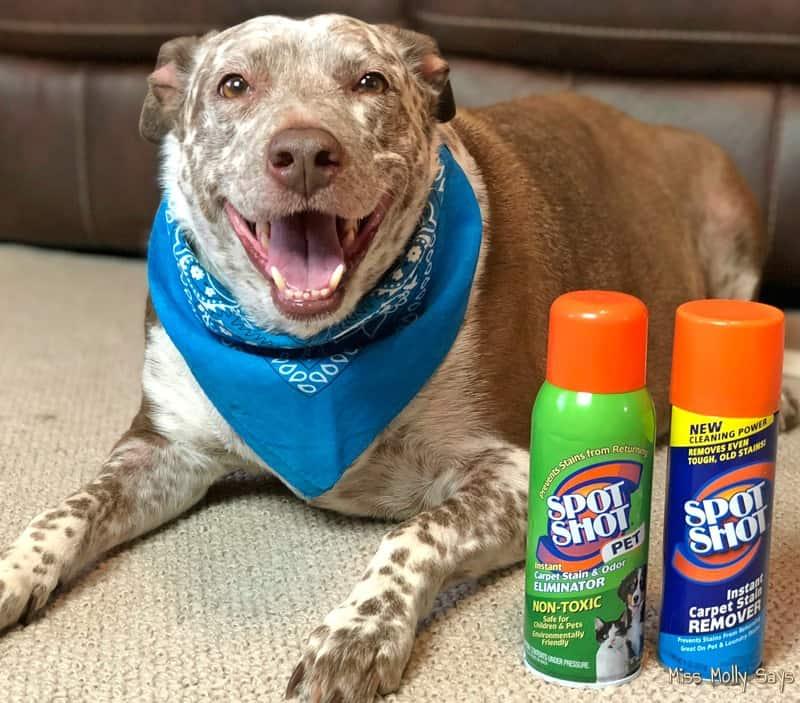How to Battle Summer's Unique and Tough Pet Stains #SpotShot