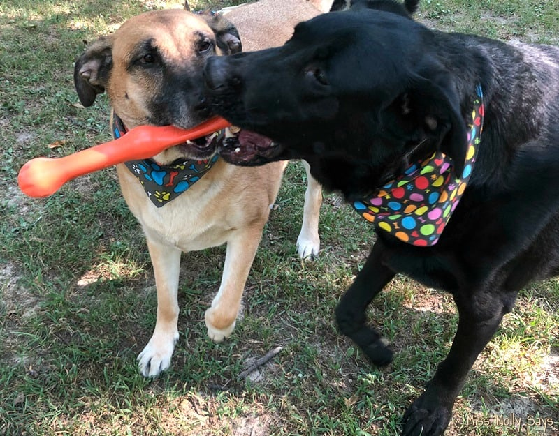 West Paw's Zwig Zogoflex Echo Dog Toy is the Perfect Alternative to Dangerous Sticks