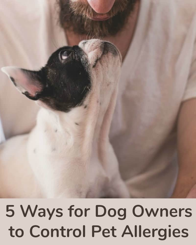 5 Ways for Dog Owners to Control Pet Allergies