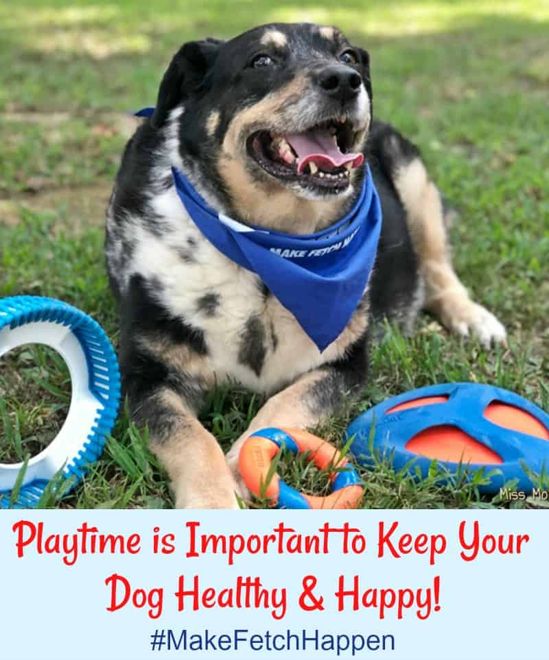 Playtime is Important to Keep Your Dog Healthy & Happy! #MakeFetchHappen with Chuckit! Dog Toys