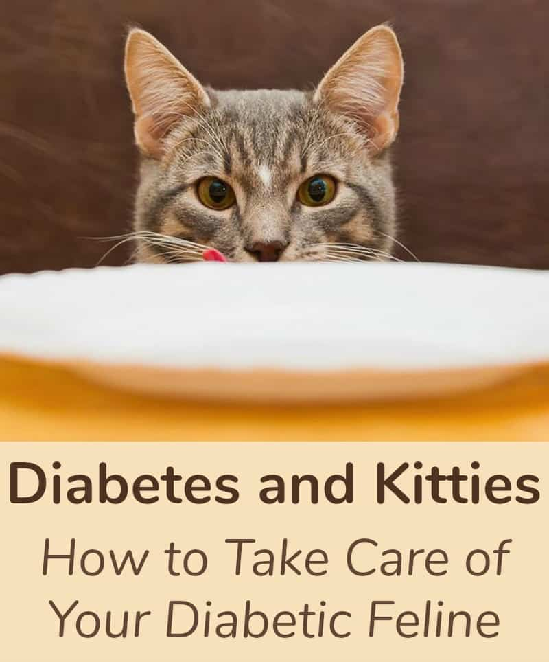 Diabetes and Kitties, How to Take Care of Your Diabetic Feline