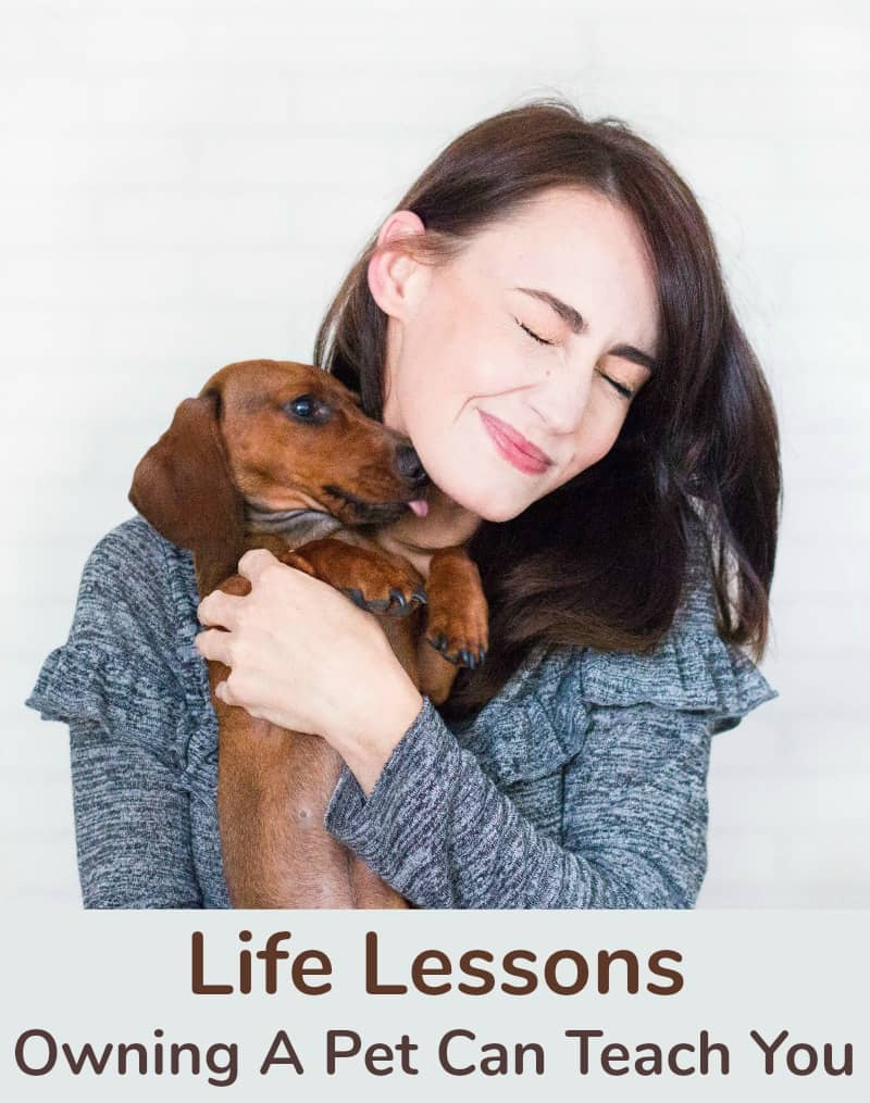 Life Lessons Owning A Pet Can Teach You