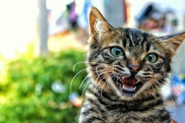 Pets Aren't People, Right Top Reasons Cats & Dogs Need Dental Care Too