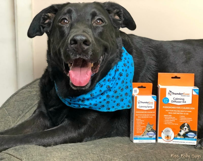 ThunderEase Helps Soothe and Alleviate Your Pet's Anxiety #ThunderShirtCompany