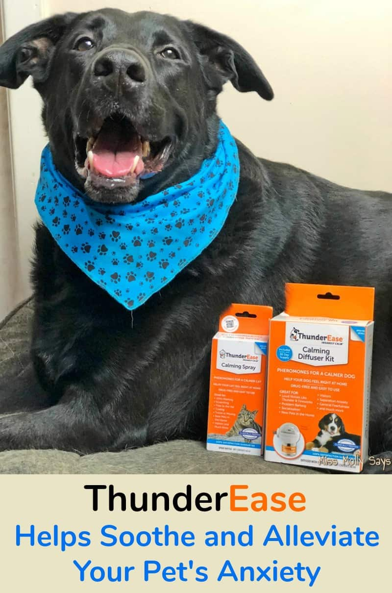 ThunderEase Helps Soothe and Alleviate Your Pet's Anxiety