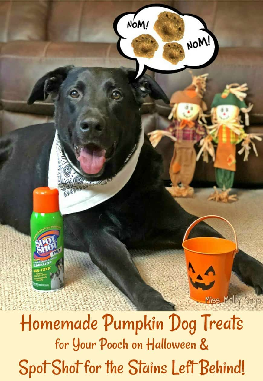 Homemade Pumpkin Dog Treats for Your Pooch on Halloween and Spot Shot for the Stains Left Behind