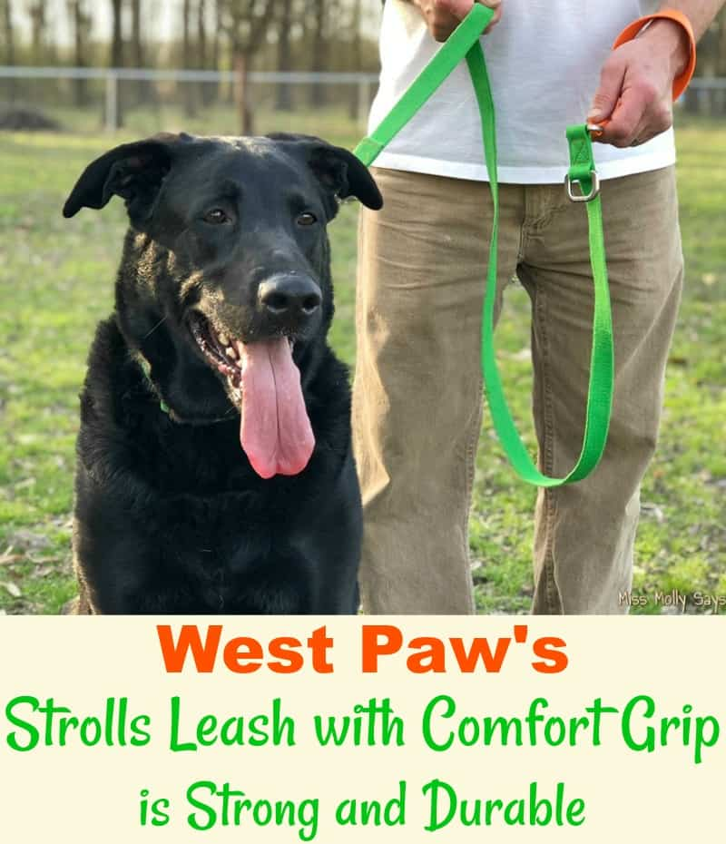 West Paw Strolls Leash with Comfort Grip is Strong and Durable