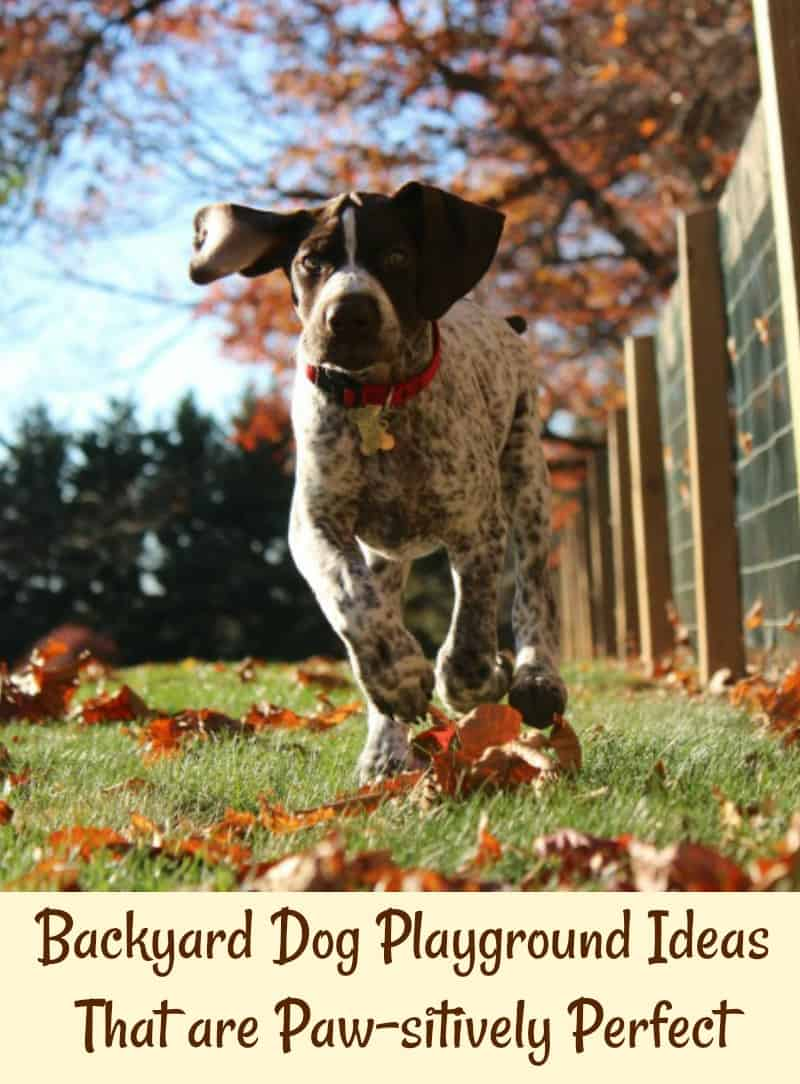 Backyard Dog Playground Ideas That are Paw-sitively Perfect
