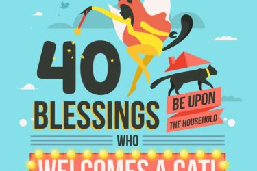Cat Lovin', These Reasons Will Make You Love Your Cats More [Infographic] horizontal