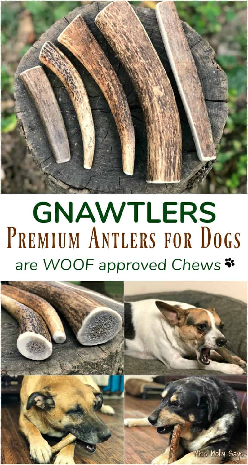 Gnawtlers Premium Antlers for Dogs are WOOF approved Chews