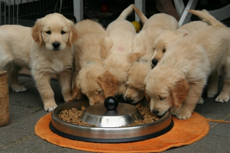 Happy and Healthy Pets: Tips for Making Home-Cooked Dog Food