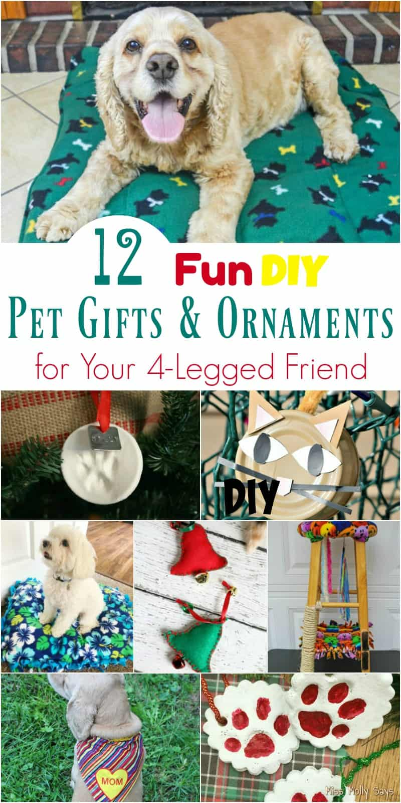 12 Fun DIY Pet Gifts & Ornaments for Your 4-Legged Friend