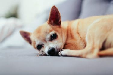 What are the Common Causes of Bile Vomiting in Dogs and How to Manage it
