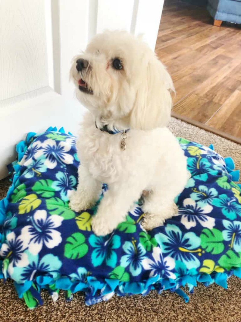 DIY Dog Bed No-Sew
