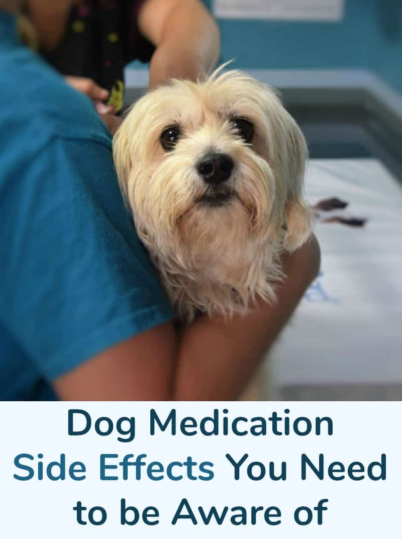 Dog Medication Side Effects You Need to be Aware of