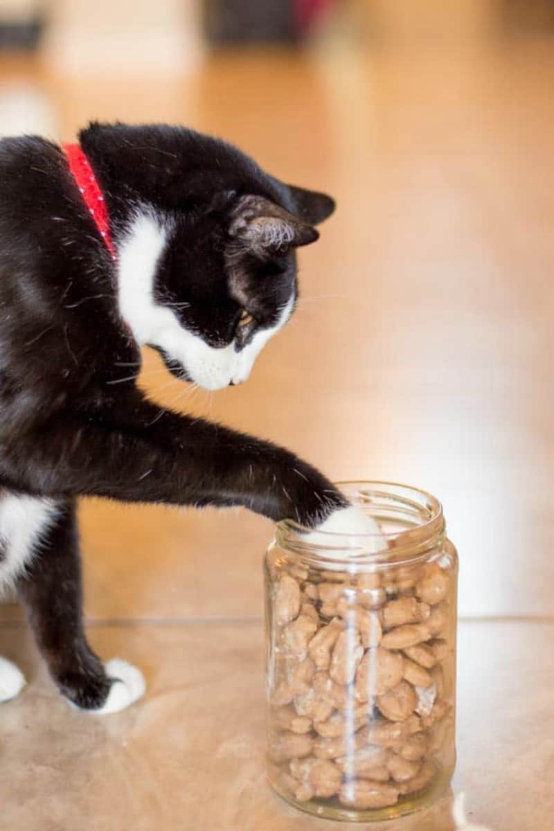 Easy Homemade Cat Treats