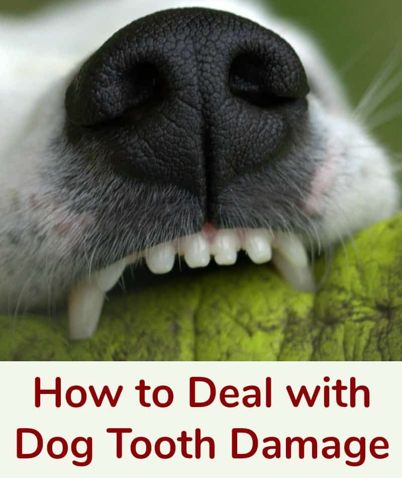 How to Deal with Dog Tooth Damage