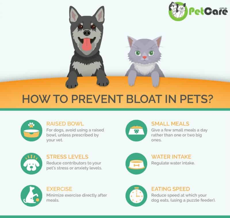 How to Prevent Bloat in Pets infographic