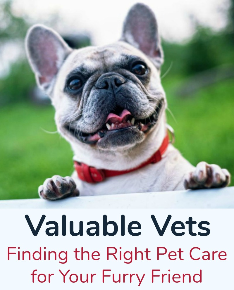 Valuable Vets Finding the Right Pet Care for Your Furry Friend