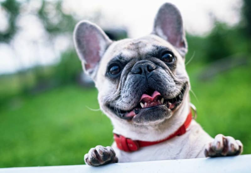 Valuable Vets: Finding the Right Pet Care for Your Furry Friend