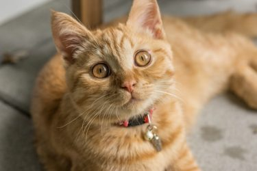 Easy and Effective Ear Mite Treatment for Cats