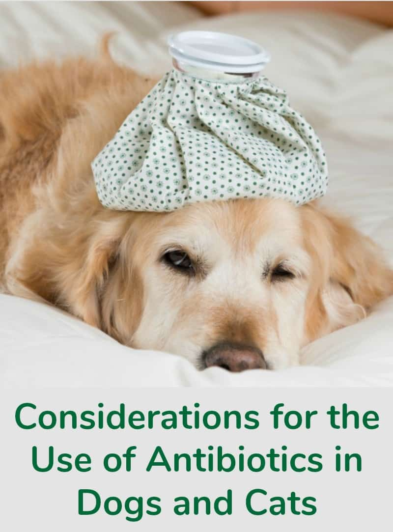 Considerations for the Use of Antibiotics in Dogs and Cats