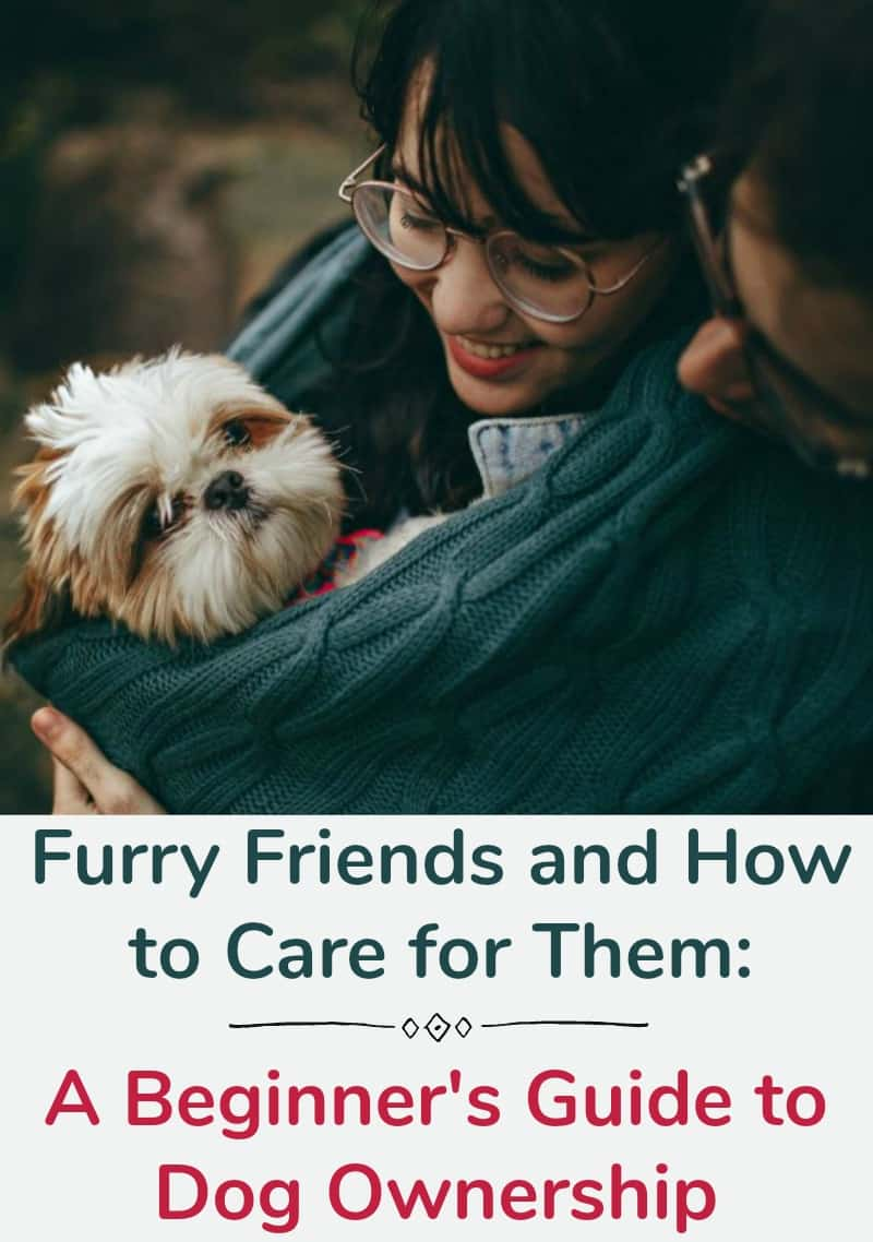 Furry Friends and How to Care for Them, A Beginner's Guide to Dog Ownership
