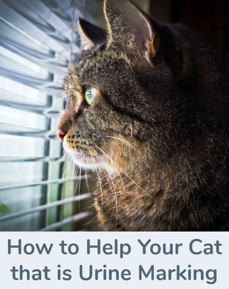 How to Help Your Cat that is Urine Marking