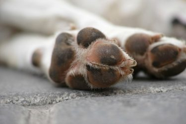 How to Protect Your Dog's Paws in Winter