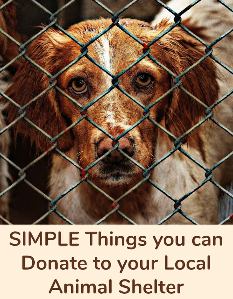 Simple Things you can Donate to your Local Animal Shelter