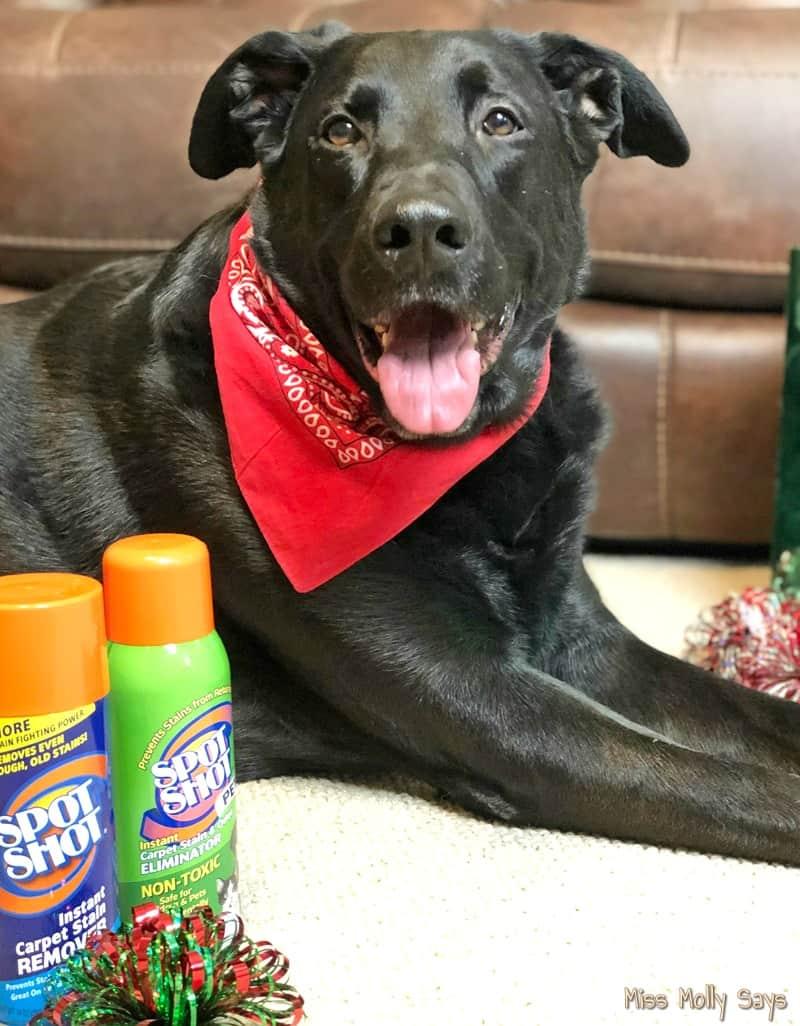 Spot Shot Pet Instant Carpet Stain & Odor Eliminator AND Spot Shot Instant Carpet Stain Remover